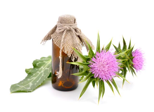 Herbs to increase testosterone - Tribulus Terrestris